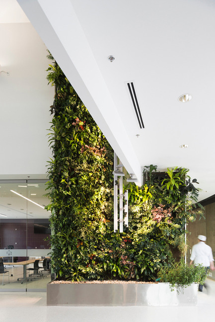 Press kit | 1866-01 - Press release | Durham College Centre for Food - Gow Hastings Architects - Institutional Architecture - A lush, green, two-storey herb garden living wall in the central atrium - Photo credit: Remi Carreiro