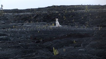 Press kit | 1046-01 - Press release | The End of Time by Peter Mettler opens the 15th RIDM on Wednesday - Rencontres Internationales du documentaire de Montréal (RIDM) - Event + Exhibition - Volcan Kilauea, Hawaii. Courtoisie de Grimthorpe Film.